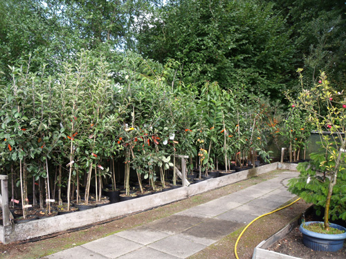 Heckenpflanzen - Gärtnerei Biernd